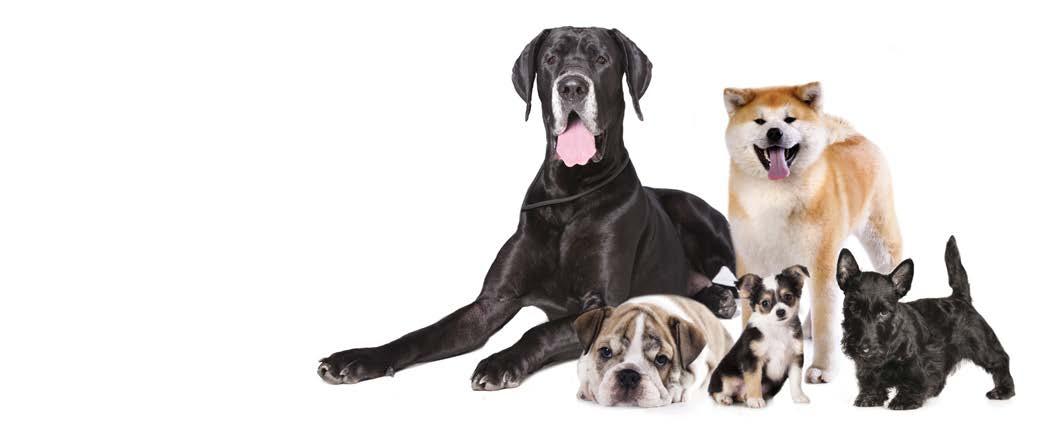 FAQ Image Animal Variations