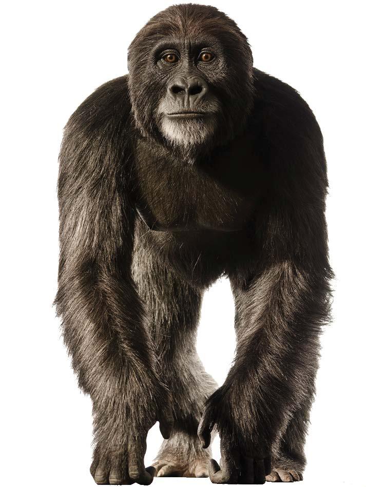 FAQ Image Ape Men