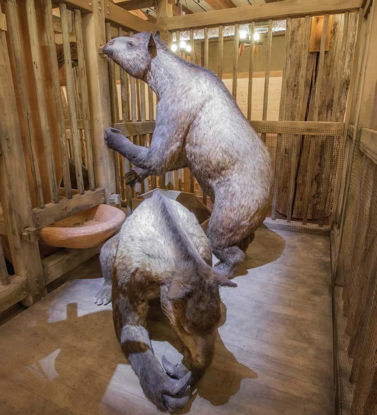 FAQ Image Noah Hold All Animals