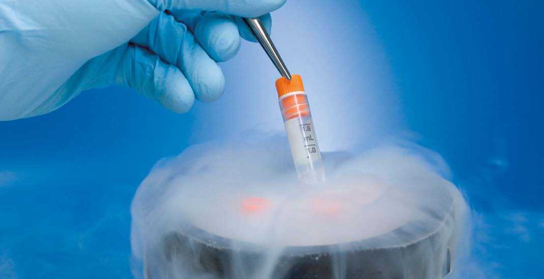 What's The Big Deal With Stem Cells?